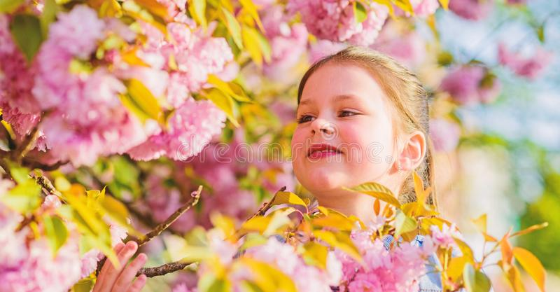 Small girl in spring flower bloom. blossom smell, allergy. skincare spa. Natural cosmetics for skin. happy girl in. Cherry flower. Sakura blooming. summer royalty free stock photos