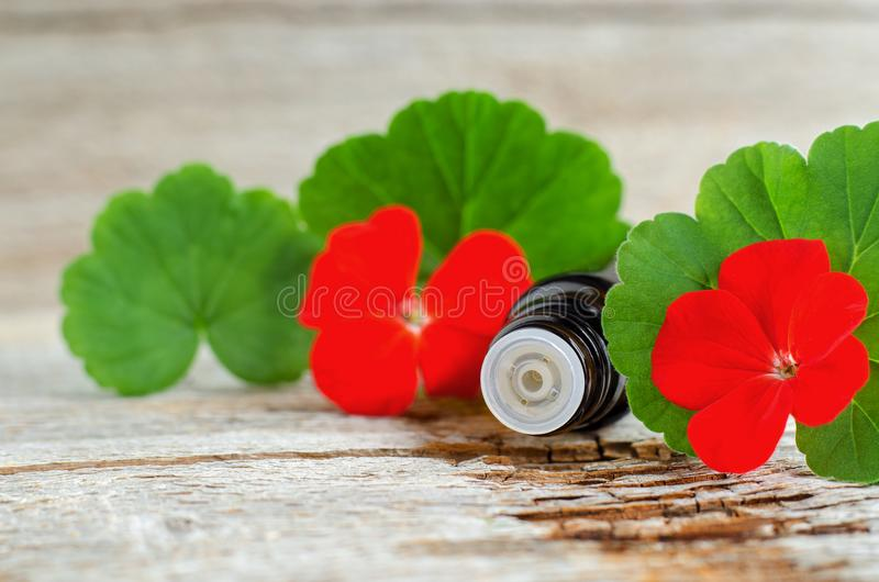 Small glass bottle with essential geranium oil on the old wooden background. Geranium leaves and flowers, close up. Aromatherapy, spa and herbal medicine stock photos