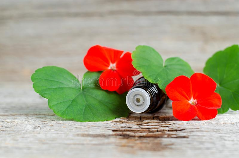 Small glass bottle with essential geranium oil on the old wooden background. Geranium leaves and flowers, close up. Aromatherapy, spa and herbal medicine royalty free stock image
