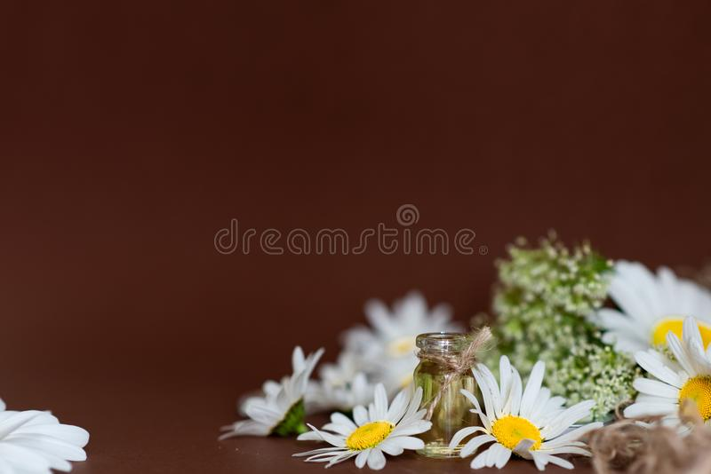 Small glass bottle with essential roman chamomile oil on the old wooden background. Chamomile flowers, close up. Aromatherapy, spa stock photography
