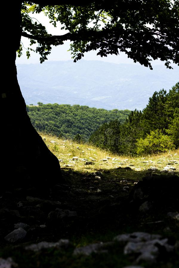 Small glimpse of mountain. Italy-, wood, tree, background, landscape, family, freedom, natural, nature, forest, greenwood, walk, ride, magic, mistery, mystery stock image