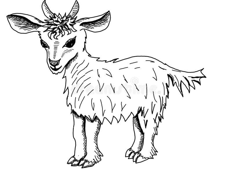 Small goat on a white background stock photos