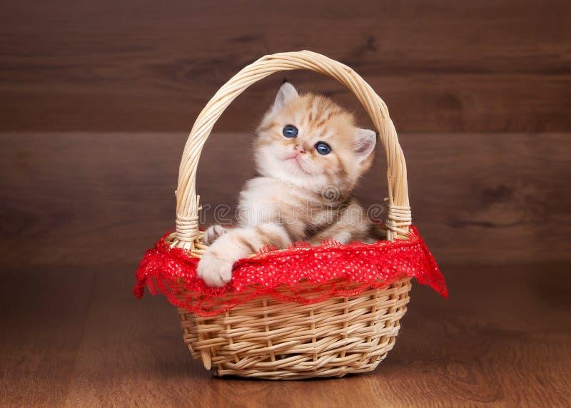 Download Small Golden British Kitten In Basket Stock Photo - Image: 26803824