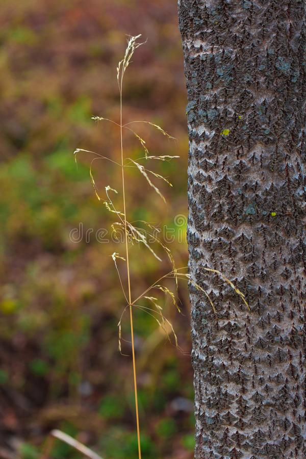 A small grass next to a tree trunk royalty free stock photo