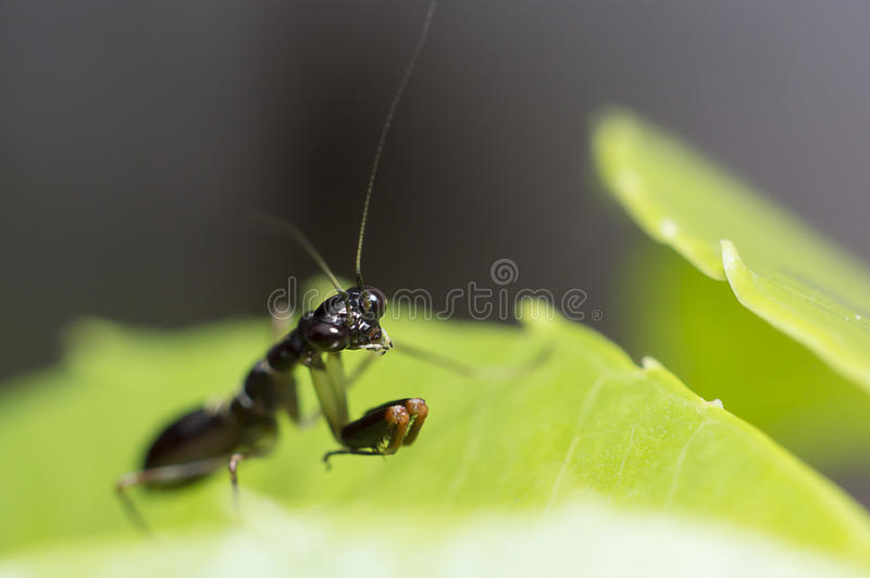 Small grasshopper royalty free stock images