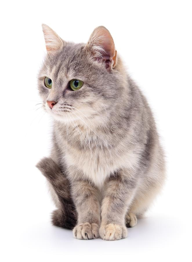 Small gray kitten. Small gray kitten on white background stock image