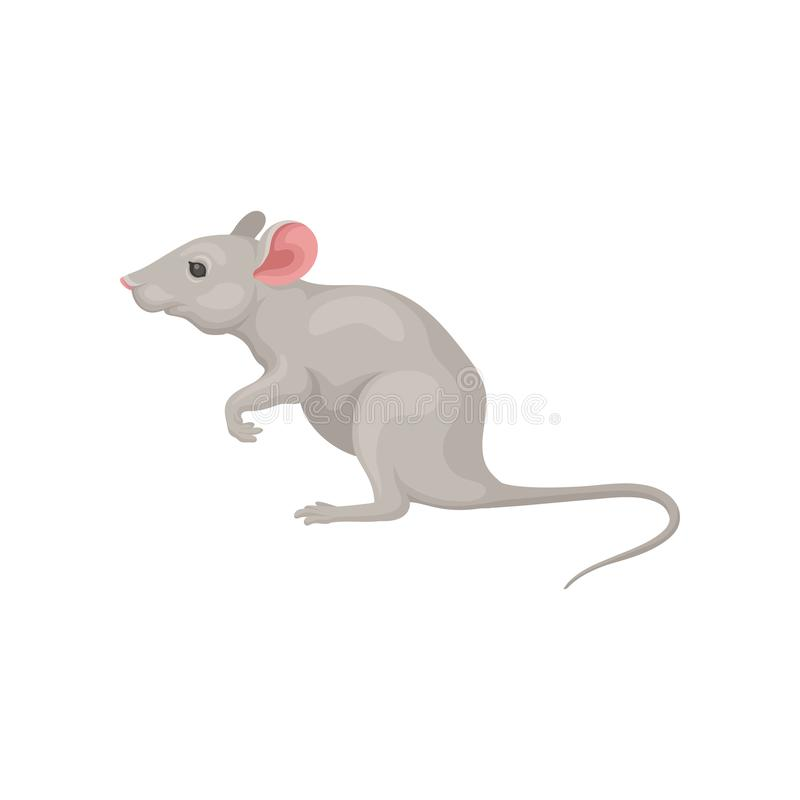 Small gray mouse standing on hind legs, side view. Domestic mice. Cute rodent with pink ears and long tail. Flat vector. Small gray mouse standing on hind legs stock illustration