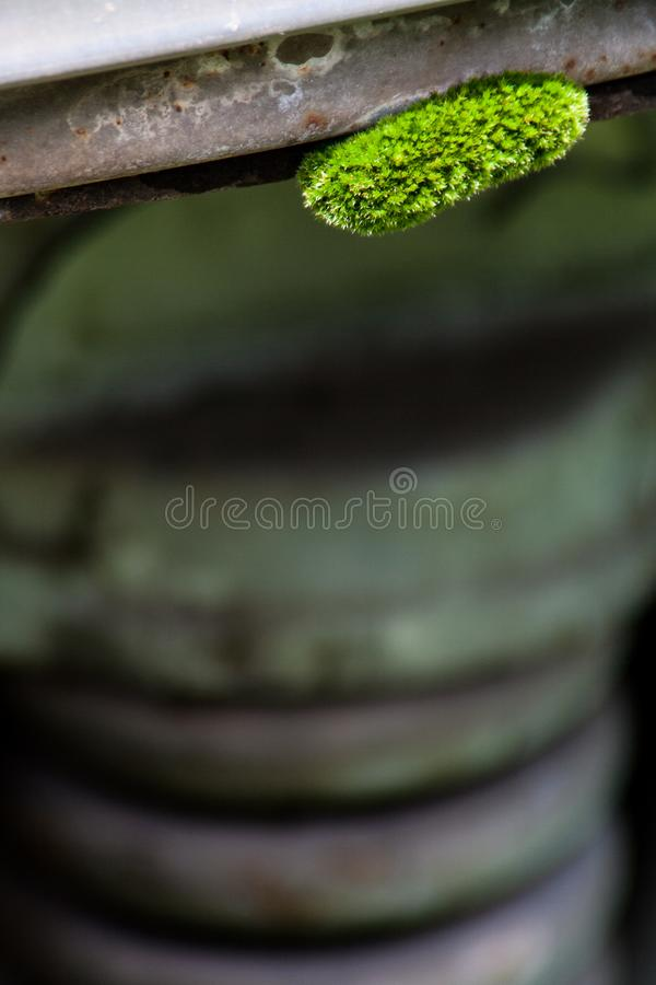 Small green moss clump growing on machinery stock photo