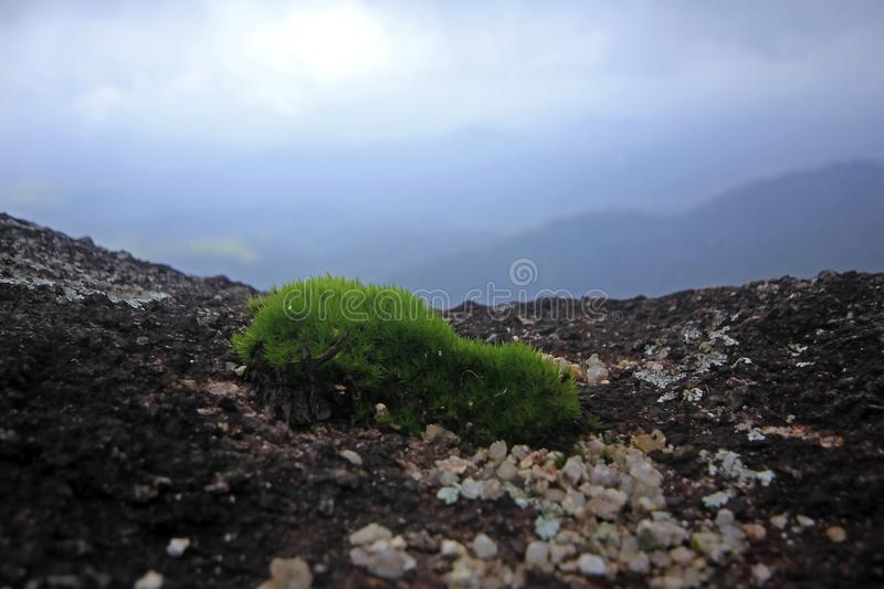 Moss green, small tree in nature on rocky ground. royalty free stock images