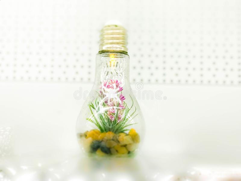 A small green organic plant flower grows inside a glass light bulb. Concept: ecology, protection of the planet stock image