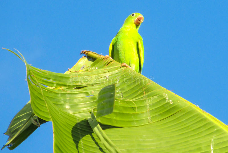 Small green parrot stock images
