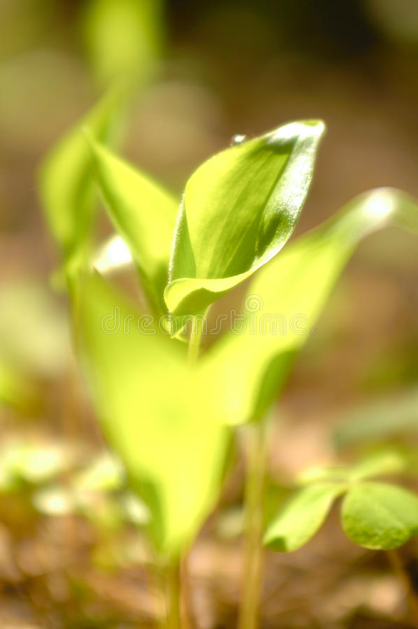Small green plant stock photos