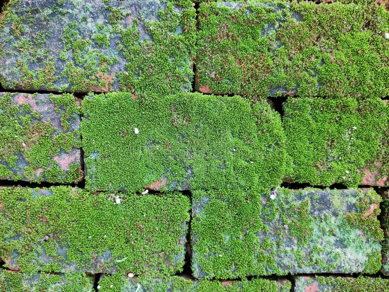 A small green plant that was born on the brick walkway in the garden. A small green plant that   on the brick walkway in the . Garden, nature, natural royalty free stock image
