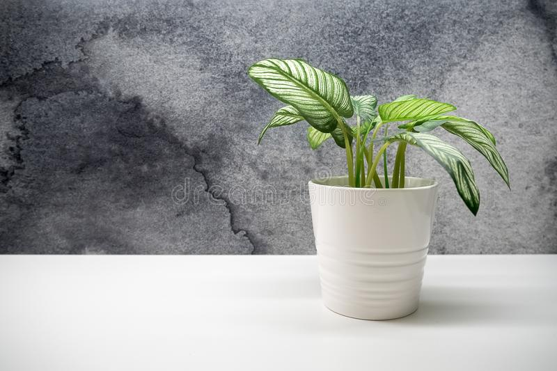 Small green plant in flower pots for interior decoration with co stock images