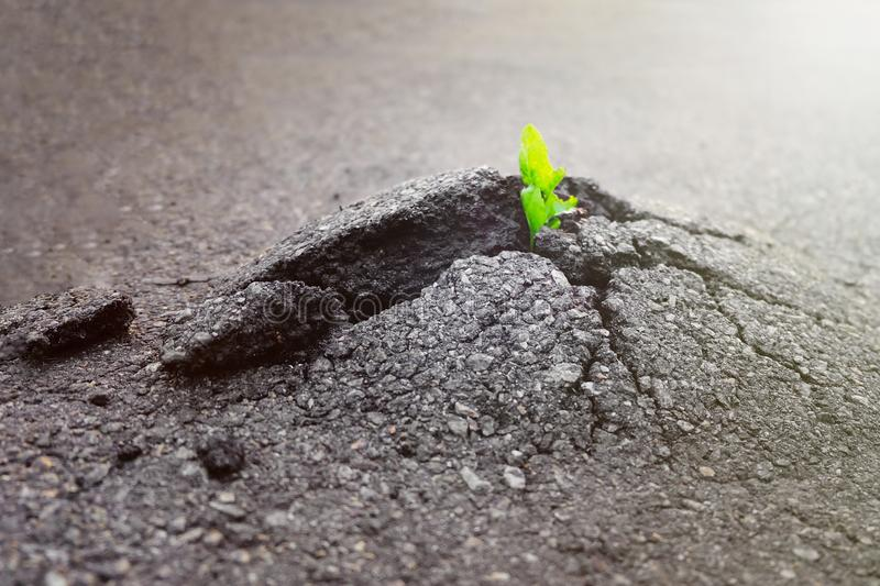 Small and green plant grows through urban asphalt ground. Green plant growing from crack in asphalt on road. Space for text or design stock photography