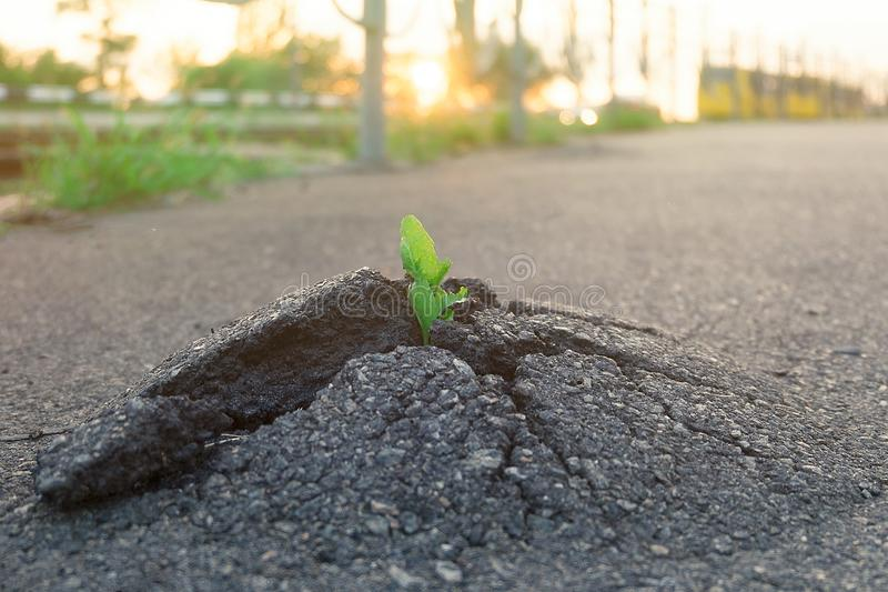 Small and green plant grows through urban asphalt ground. Green plant growing from crack in asphalt on road. Space for text or design stock image