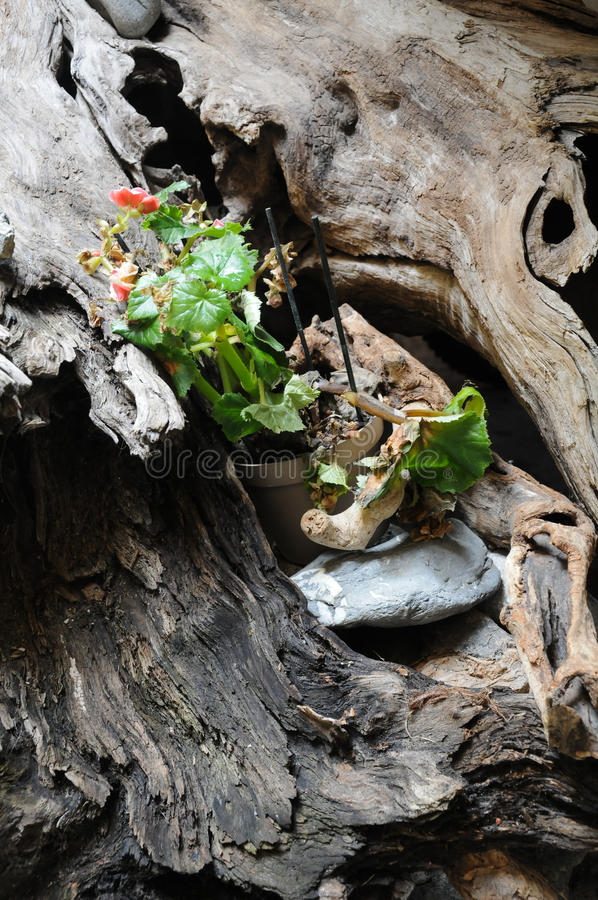Small green plant inside a wooden log stock photo