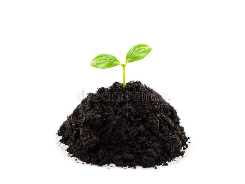 Small green plant sprout leaf growth at dirt soil heap stock photos