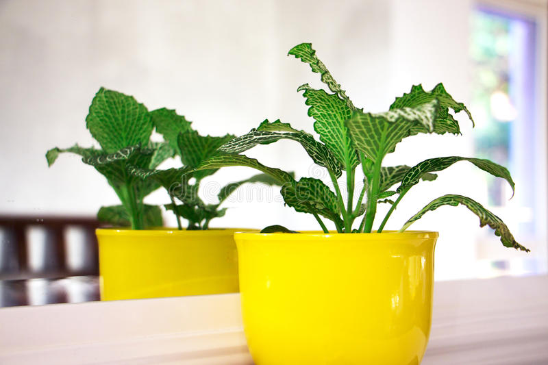 Small green plant. On white table and mirror royalty free stock image