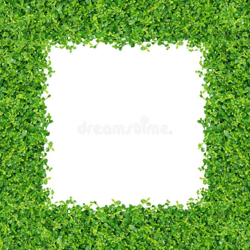 Small green plants stock photos