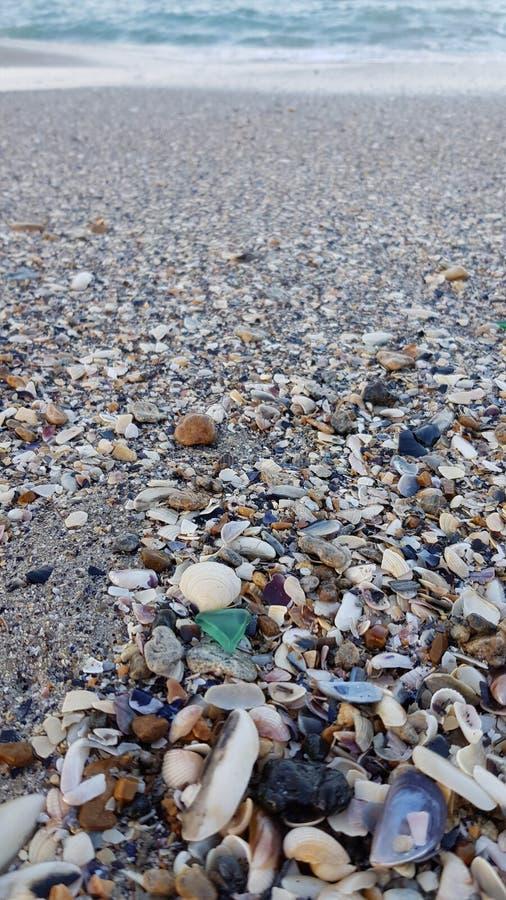 Small green sea glass among various wet seashells. And sea stones on gray sand of Black sea coastline. Sea beach textures. Natural shell backdrop. Travel stock photography