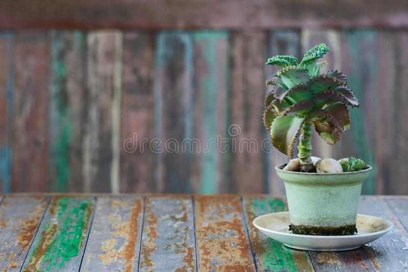Small green succulent plant in flower pot on grunge wood with old cracked painted vintage retro table with free space stock image