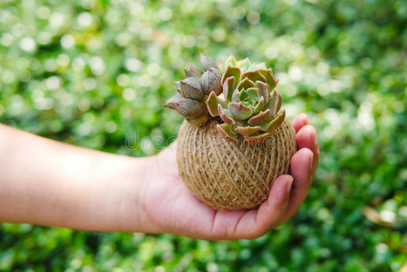 Small green succulent plant in rope ball pot on woman hand background , close up stock photography