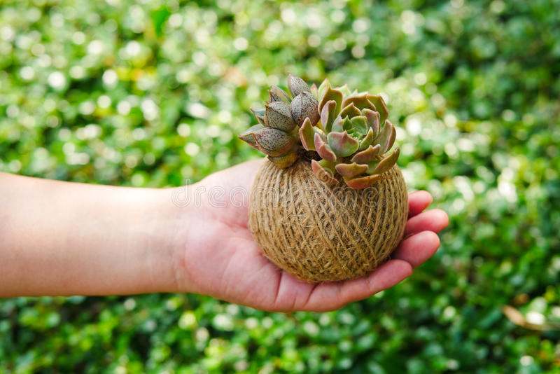 Small green succulent plant in rope ball pot on woman hand background , close up stock image