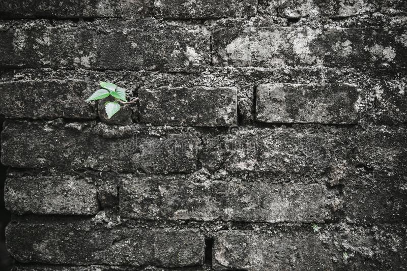 Small green tree growth up from old crack brick royalty free stock image