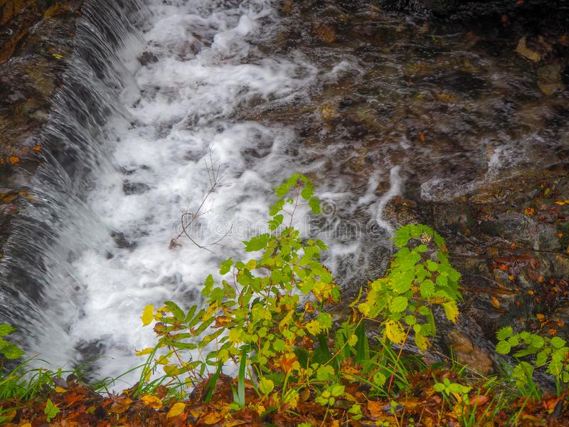 Small green trees beside a small waterfall royalty free stock photos