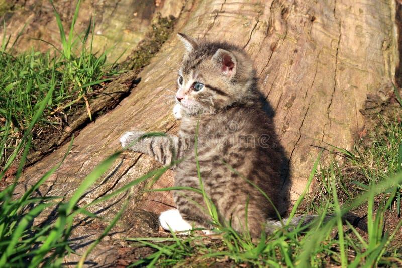 Small grey cat