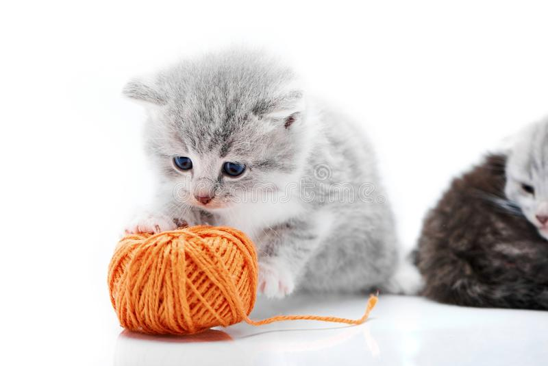 Small grey fluffy adorable kitten is playing with orange yarn ball while other kitties are playing in the background in royalty free stock photos