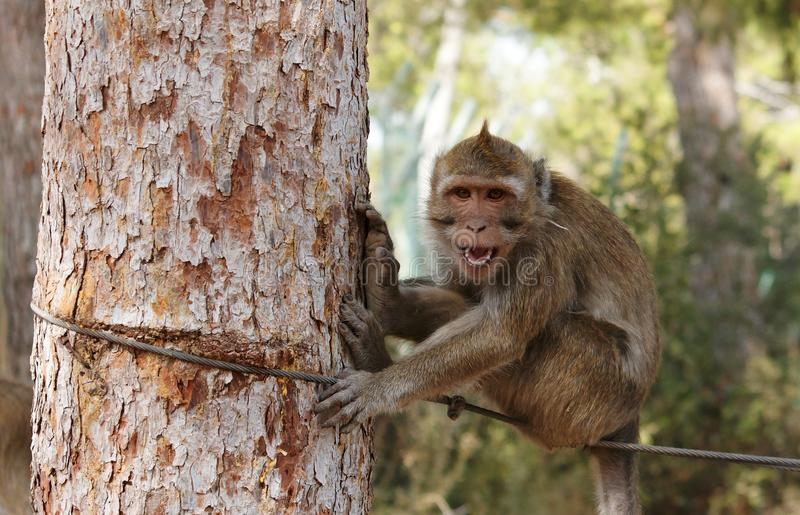 Download Small Grinning Monkey On The Rope Stock Image - Image: 12070363