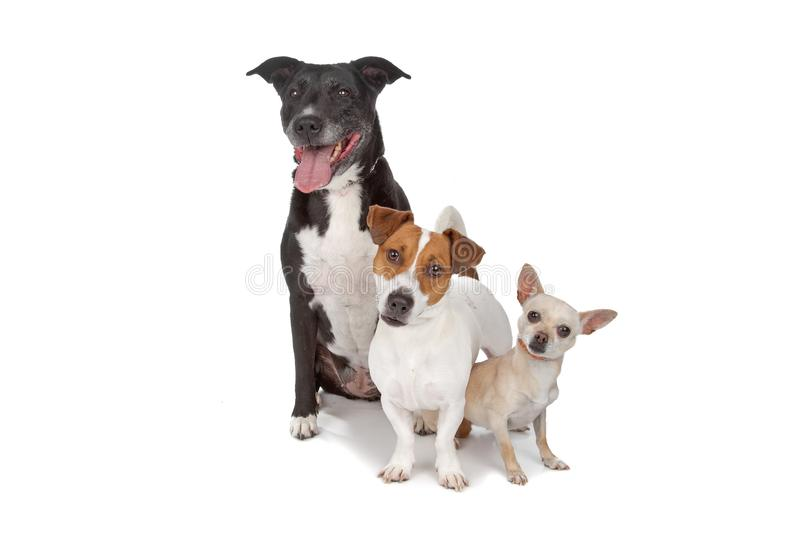 Small group of dogs stock photography