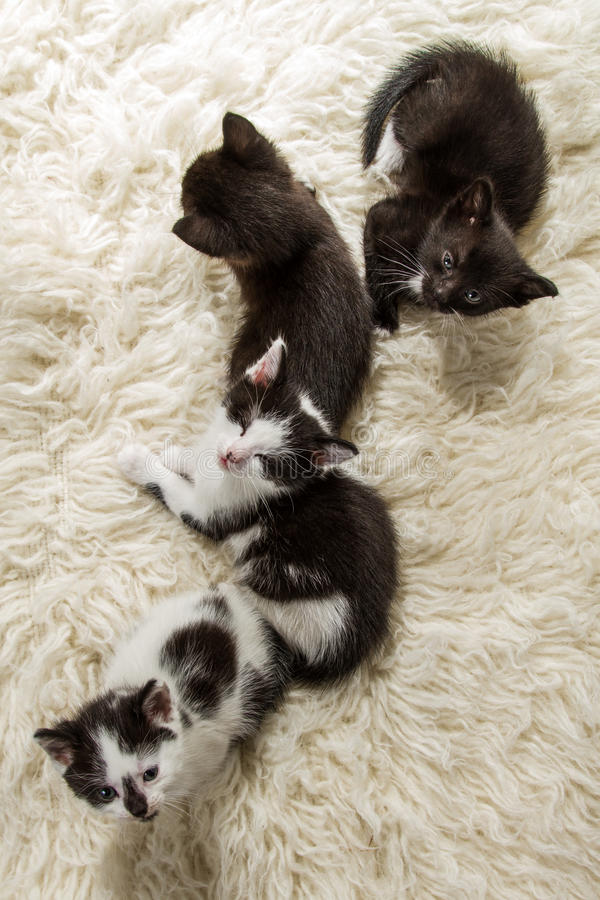 Small group of kittens stock images