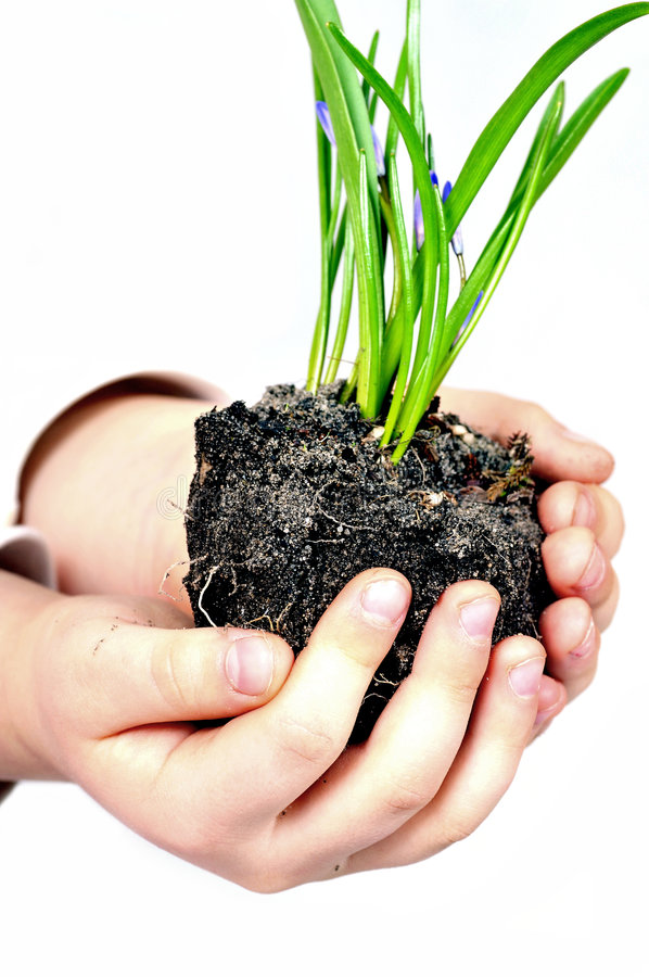 Small hand holding plants stock photography
