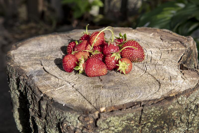 A small heap of strawberries lies on a wooden hemp stock image