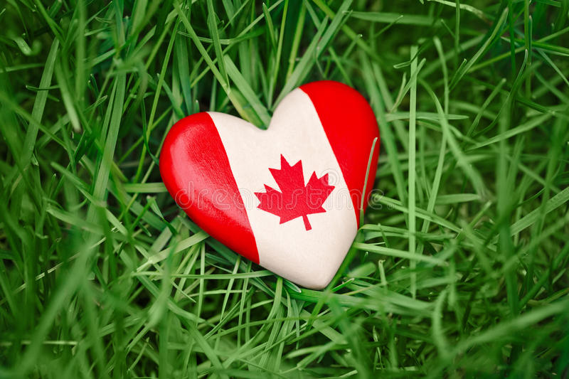 small heart with red white canadian flag maple leaf lying in grass on green forest nature background outside, Canada day royalty free stock image