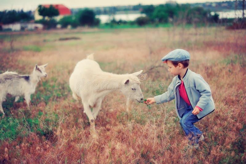 Small Herdboy Stock Photo
