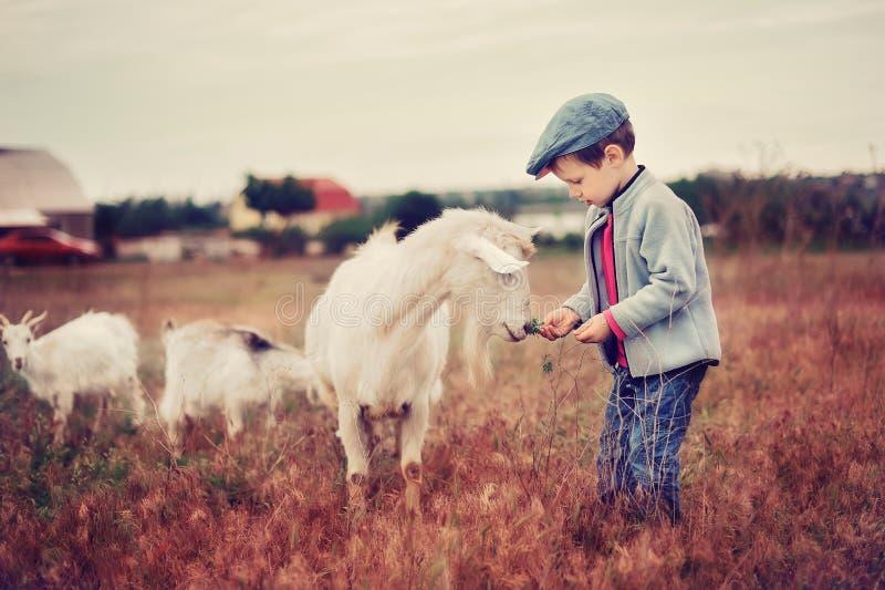Small herdboy stock image