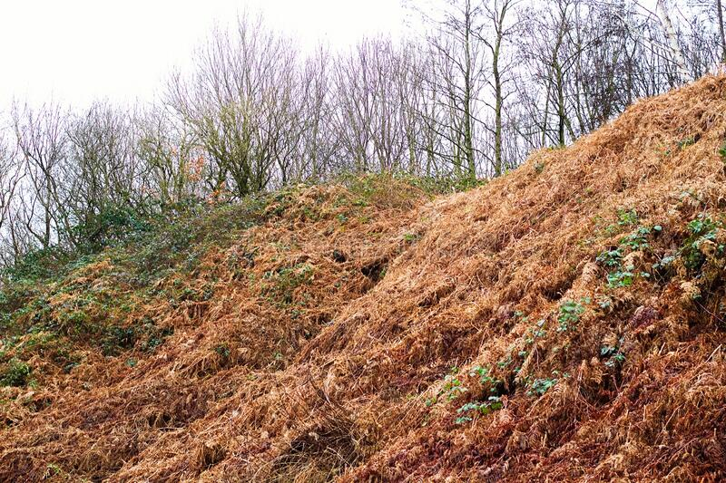 Small Hill of dried Grass In a Forest Up Close.  royalty free stock images