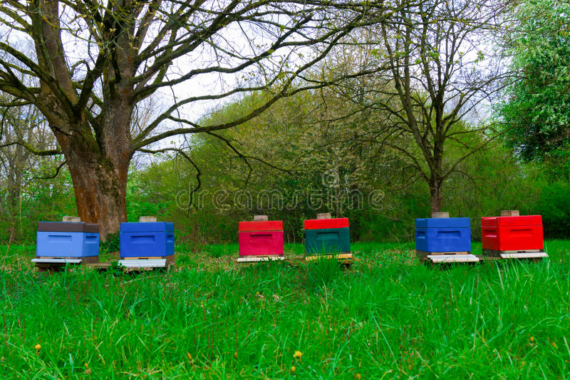 Small hives on the field. Small multi-colored beehives in the clearing royalty free stock image