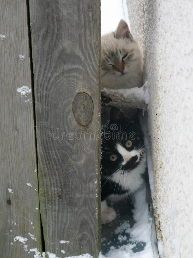 Small homeless fluffy kittens, white and black stock photos