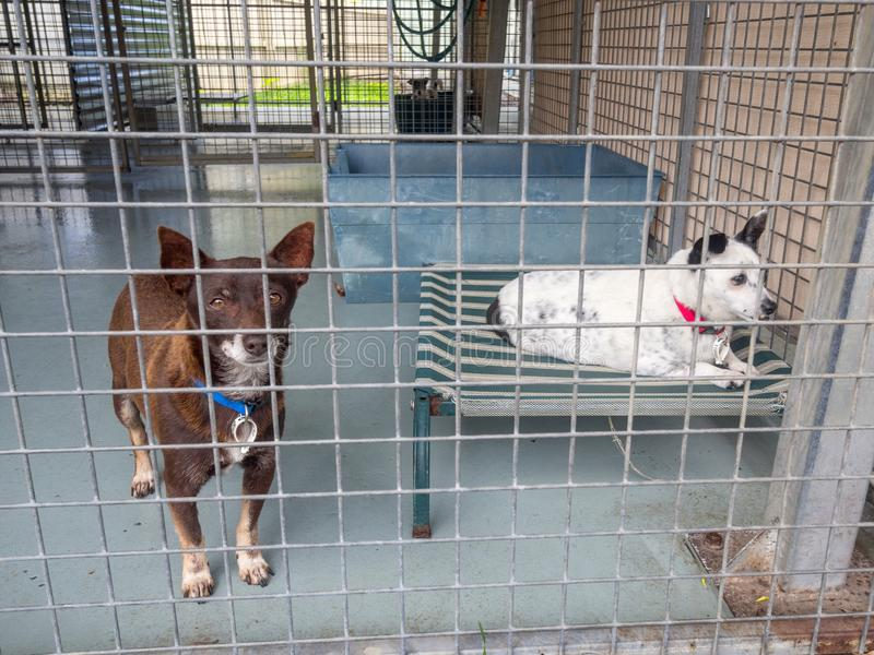 Small homeless shelter dogs in cage at the pound waiting for adoption royalty free stock images