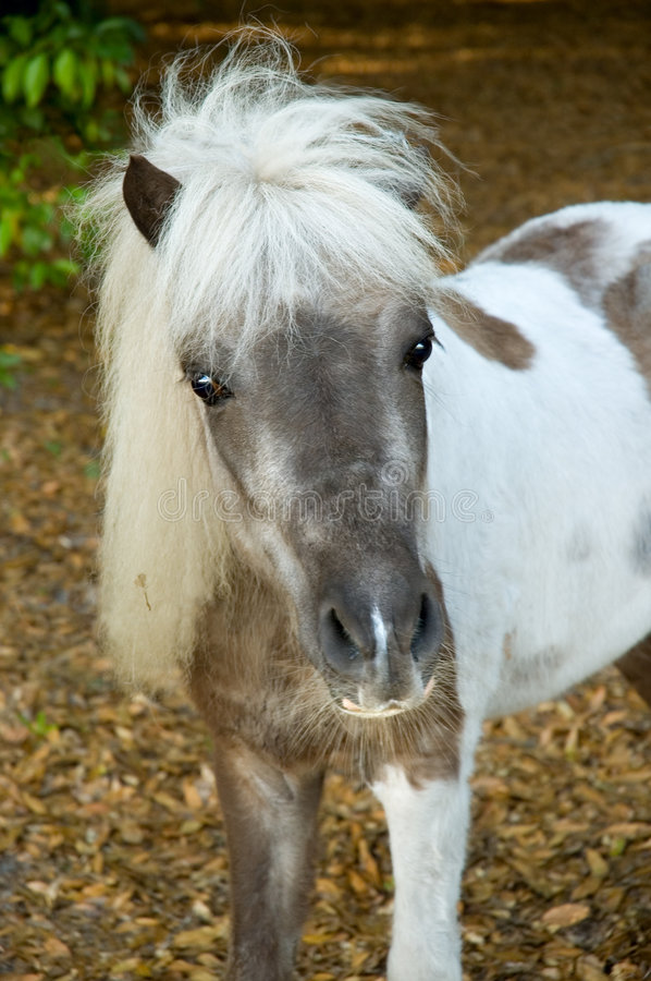 Download Small Horse Stock Image - Image: 2413371