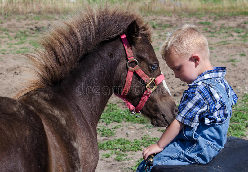 Small horse loves his boy. An adorable blond toddler poses with a very friendly miniature horse, in a sweet, touching portrait as the animal loves this child stock photography