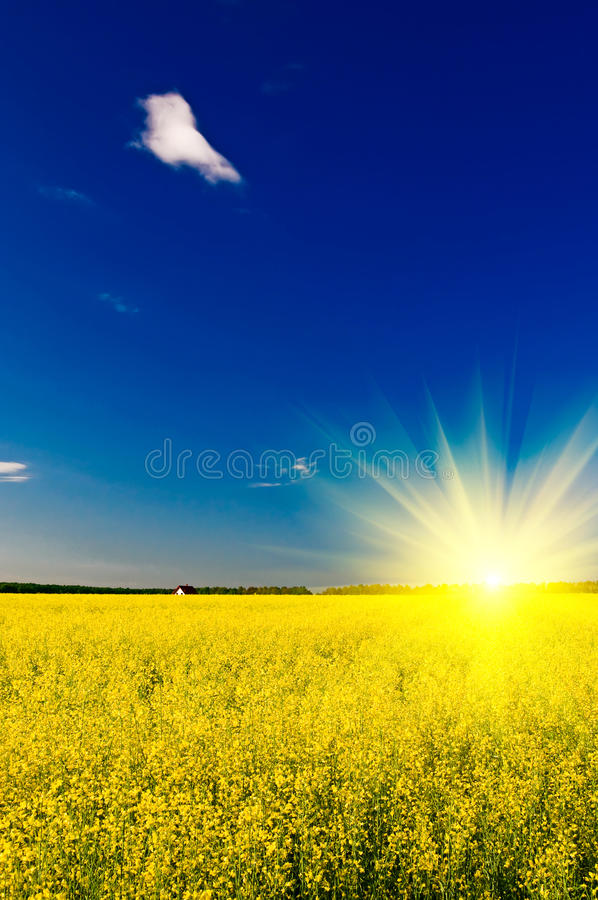 Free Small House Among Golden Rapeseed Field. Stock Photography - 14446602