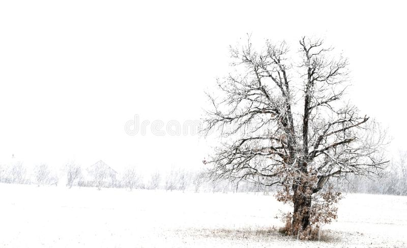 Small house at night in the snow. A small house at night in the snow stock photo