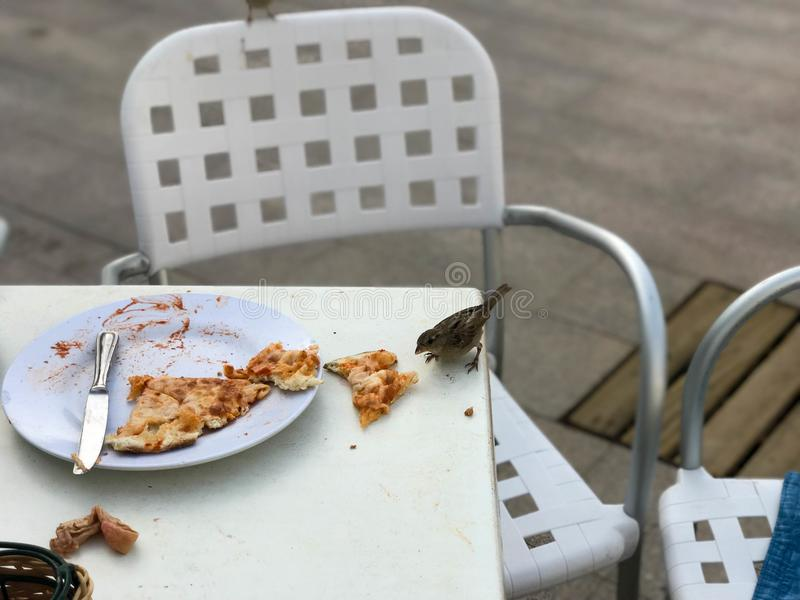A small hungry bird of sparrows eats from a visitor`s plate in an outdoor cafe on the street royalty free stock photos