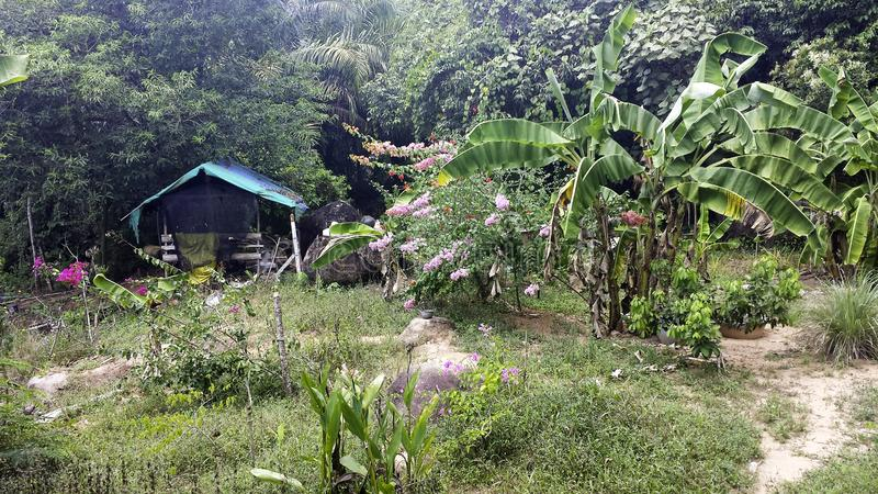 a small hut in the jungle royalty free stock images